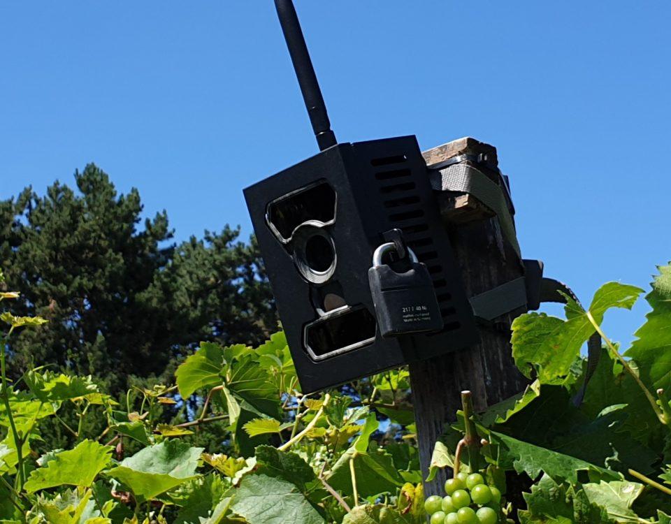 SECACAM Mobile – 3G Wildkamera mit SIM-Karte sendefähig (GPRS, GSM, UMTS / 3G) mit Handy-Übertragung & App