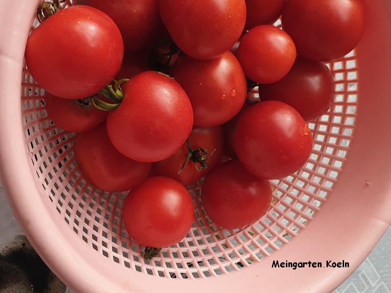Saatgut aus Tomaten selber Herstellen_2